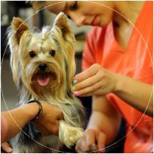 Atitudine proactiva a salonului canin Alphapet