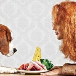 Alimente pentru oameni care sunt bune si pentru caini