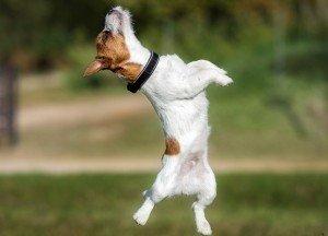 Problemele canine la sold si articulatii