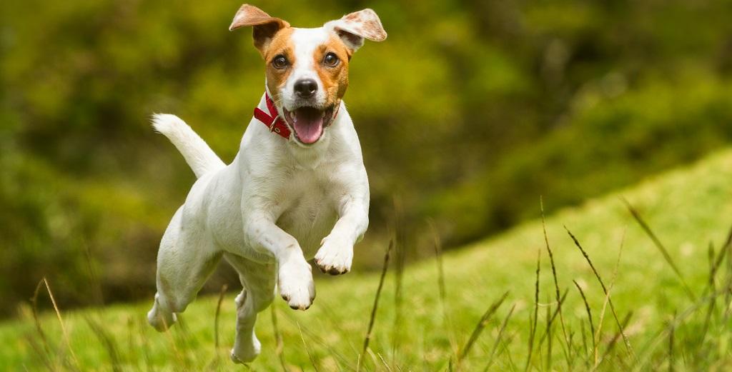 Probleme canine la articolatii si sold
