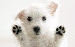 Un membru canin nou in familie
