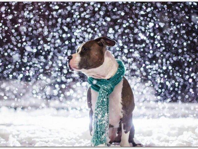 Ingrijirea canina pe timp de iarna